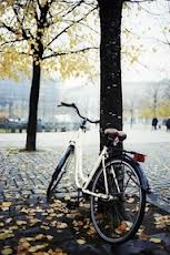 cycling four seasons in autumn